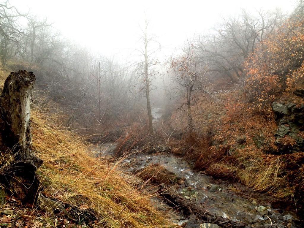 East Mountain Wilderness