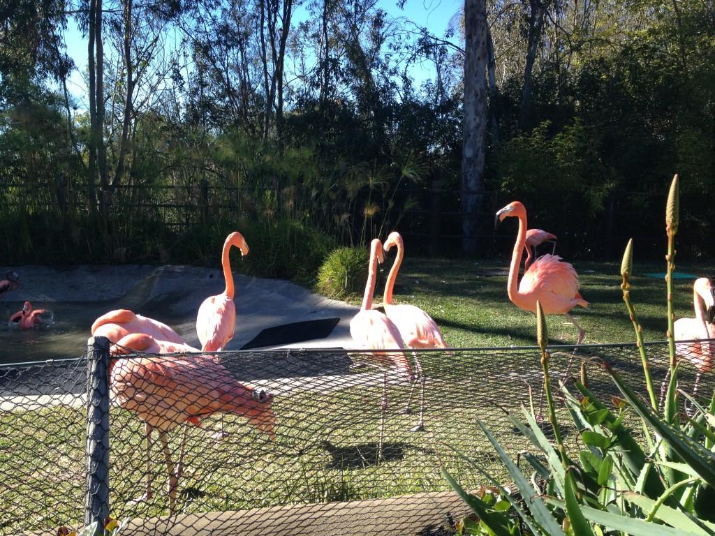 Flamingos hanging out