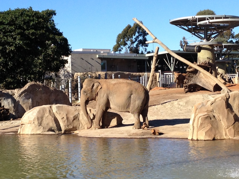 Do Go All Year: The San Diego Zoo is open year-round with San Diego's perfect climate. San Diego Zoo hours vary by season, but the park is open every day of the week including holidays. San Diego Zoo hours vary by season, but the park is open every day of the week including holidays.