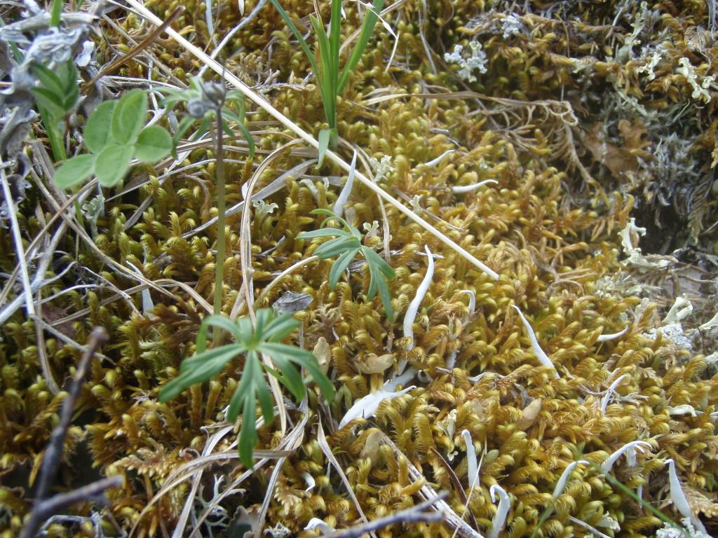 Savage River tundra close-up
