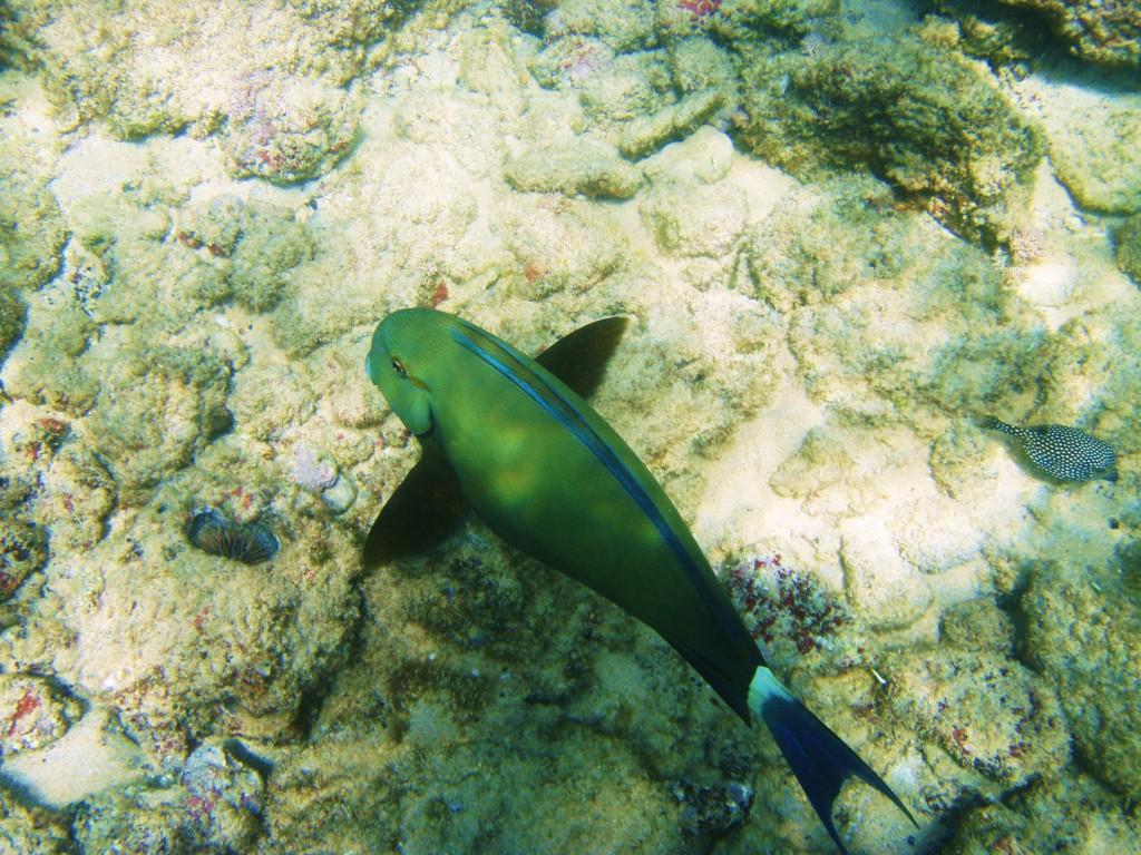Lots of aquatic life to be seen