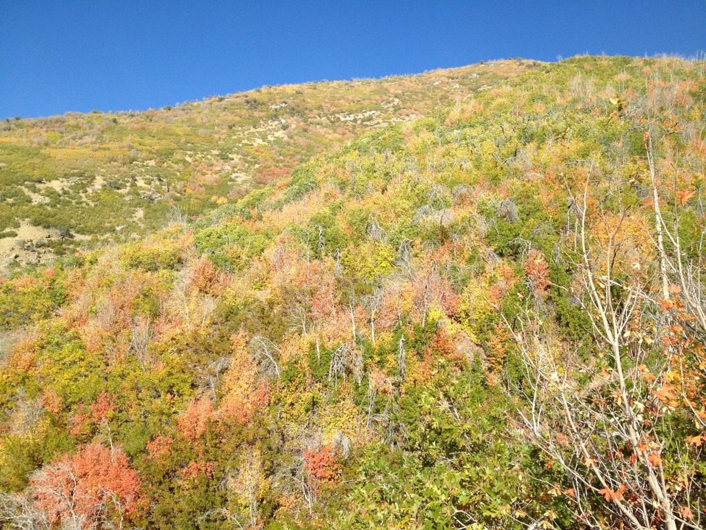 The North trailhead winds around very thick vegetation