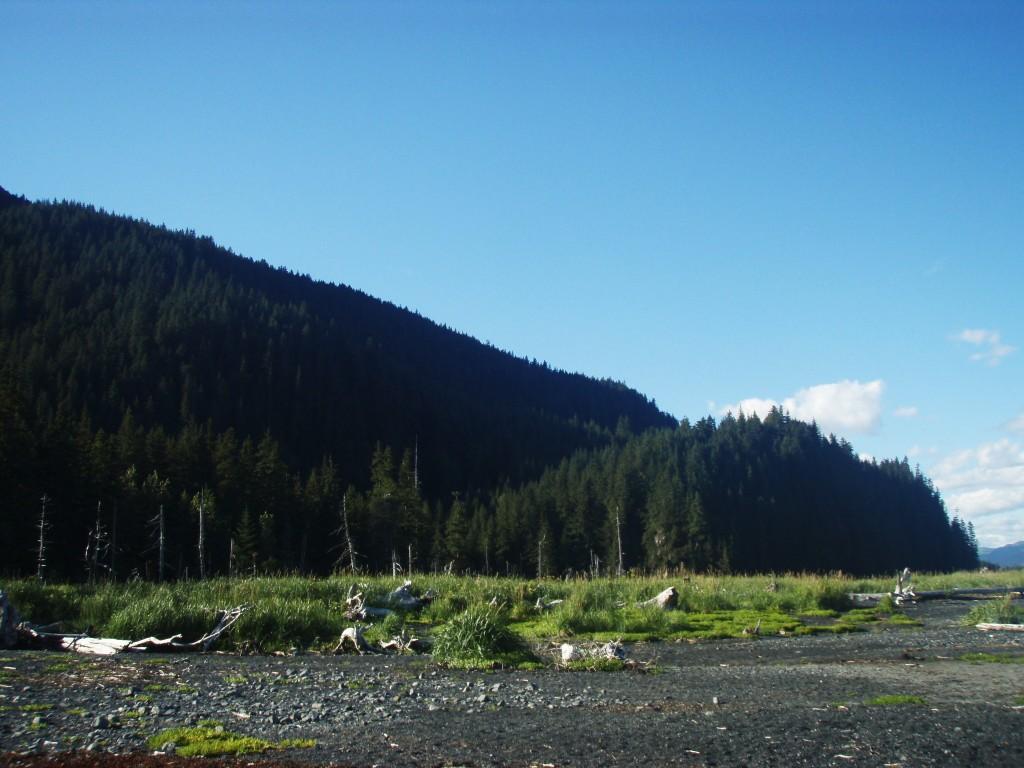 Tonsina Creek Seward Alaska