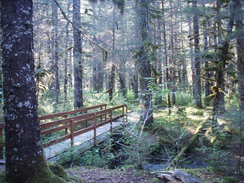 Another bridge inside the spruce forest