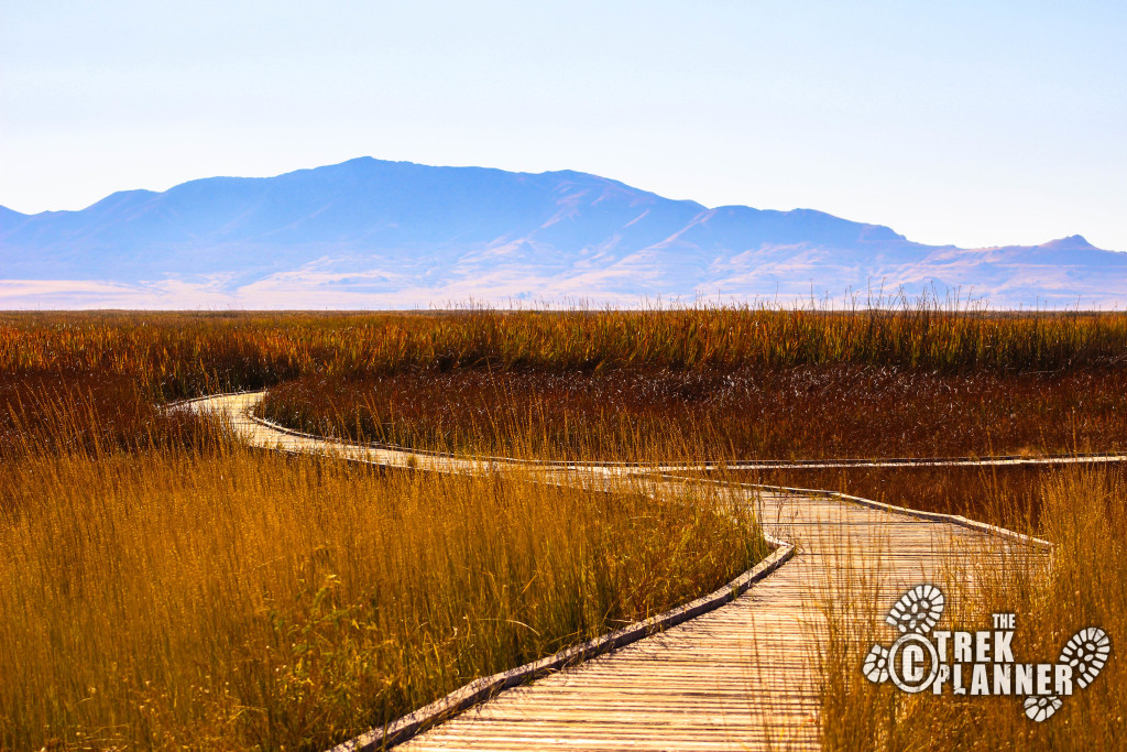 Great Salt Lake Shorelands Preserve
