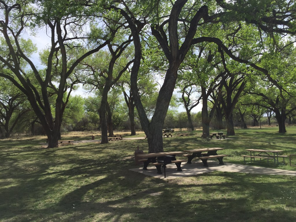 Picnic Area - lots of picnic tables with grills