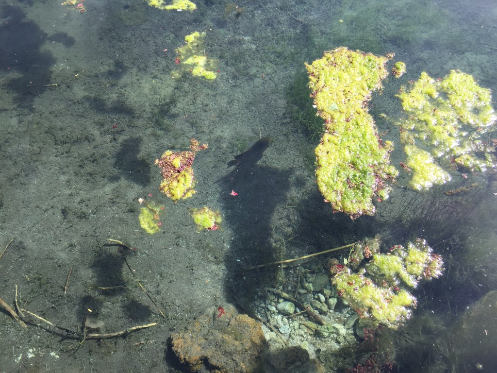 We saw some fish though I do not know what kind they were