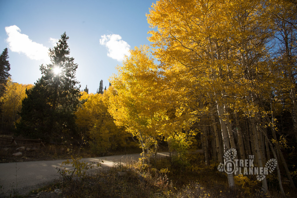 Road winding through aspen groves.