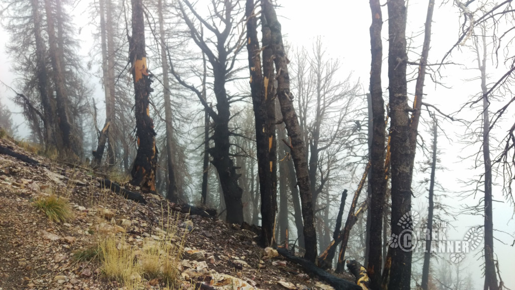 Burned trees from an old fire, most likely lightening caused.