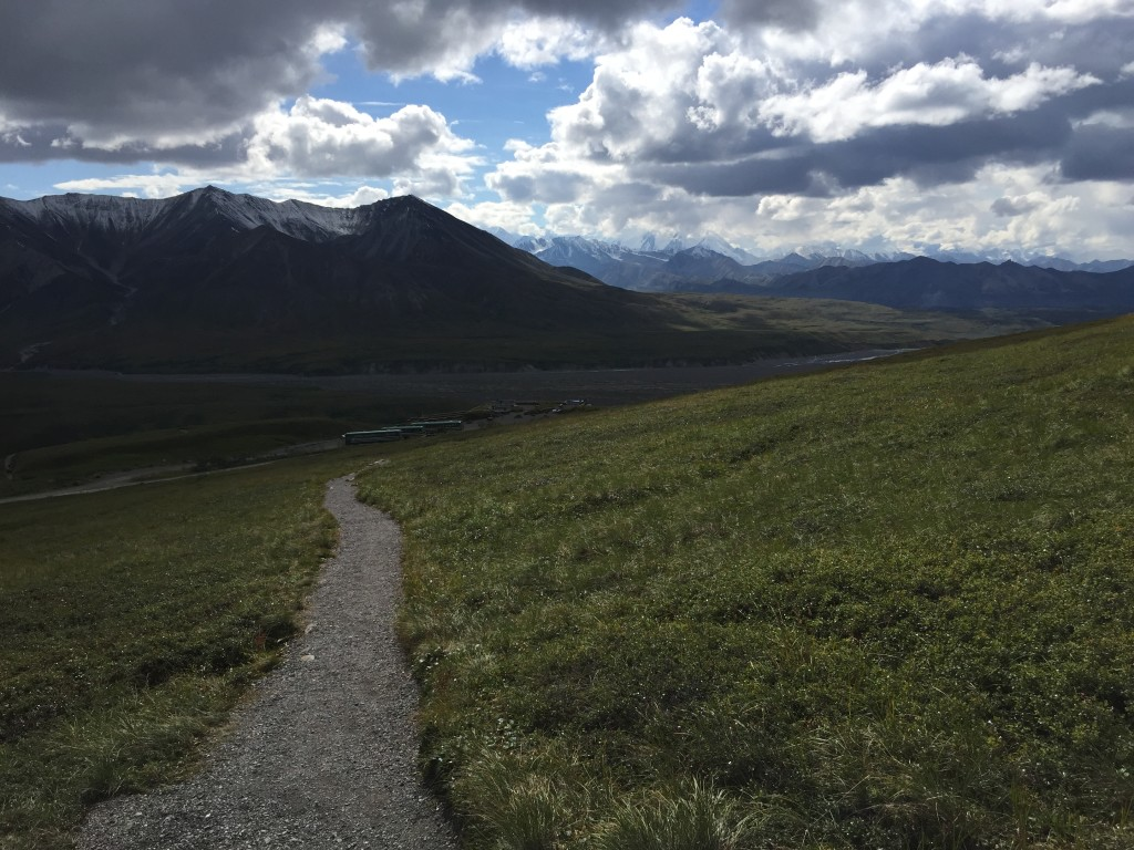 Alpine Trail - Denali National Park