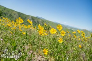3 Mile Creek Road - Wellsville Mountains