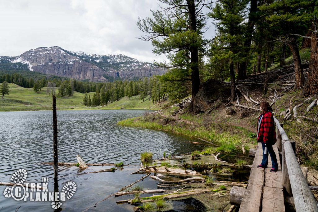 Trout Lake - Yellowstone National Park